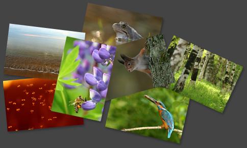 Loodusfotod